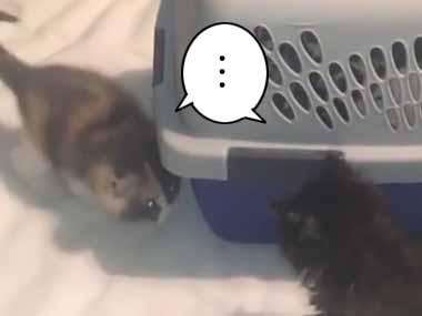 2匹の子ネコが初めて出会った。仲良くなれるかな? → クレートの周りでこんな感じ…