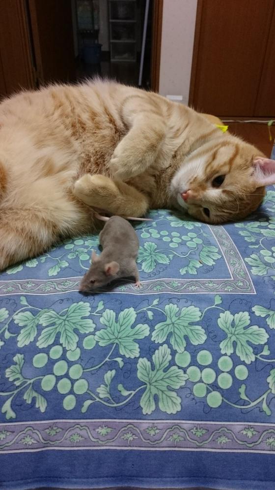 【画像あり】助けて!家にネズミが出た!!!!!!猫が何もしてくれない。。。