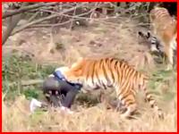 中国の動物園で男性客がトラに襲われて死亡。の映像がライブリークに来たぞ。