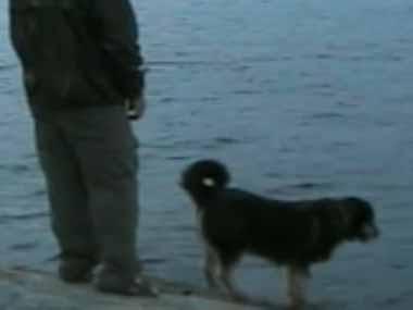 イヌと釣りにやってきた。全然釣れなくて退屈だ。そうだ犬を湖に落としちゃえw → こうなる…