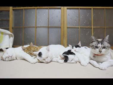 6匹のネコが仲良く並んでいた。5匹はくっついて眠っている → 起きてる1匹はこうなった…