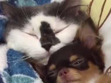 【動物家族】 ネコと小さい犬が一緒に寝ている → そこに2匹の子猫と「小さなモフモフ」もいる風景はこんな感じ…