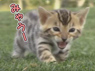可愛い子ネコが怒り出した。「激おこぷんぷん丸」を通り越す → 世界はこうなった…