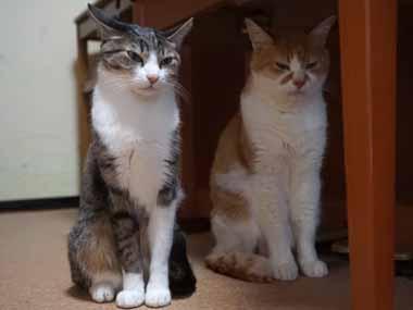 2匹のネコが並んで座っていた。1匹の猫は頭を撫でて欲しいようだ → 何度もこうする…