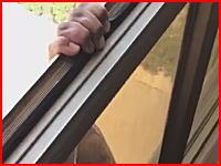 窓の外にぶら下がり助けを求める女性。←を撮影していたら落ちちゃった動画。