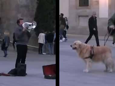 イヌと広場を散歩していた。ストリートミュージシャンが演奏している。これは良い曲だワン! → 犬はこうなる…