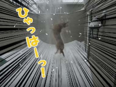 イヌの隣でお父さんが「雪かき」を始める。スコップで雪を投げる → 犬はこうなるw