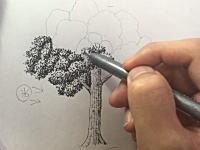 立体感を120%引き出す樹木の描き方。漫画家でイラストレーターの吉村拓也さんによる作画動画が人気に。