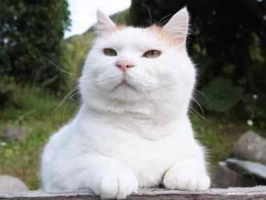 ネコに「レタス」を被せてみた → こうなった…