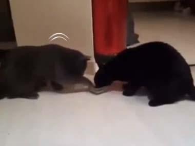 2匹のネコが食べ物を取り合っていた。それを「逆再生」してみる → 世界が「平和」になったったwwwww