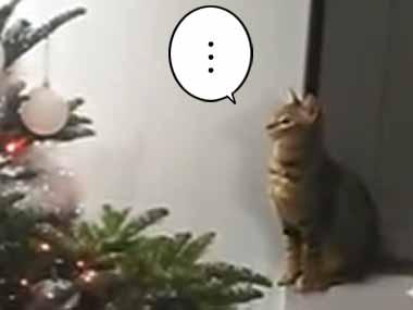 うちのネコがじっと「クリスマスツリー」を見ていた。どうしたの? → すると…