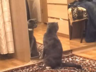 うちのネコが鏡を見ていた。自分の姿にショックを受ける → こうなる…