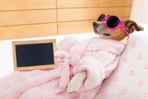 愛犬にもラグジュアリー。スイートルームでリラックス、設備も食事も充実した犬のための豪華なペットホテル(アメリカ)