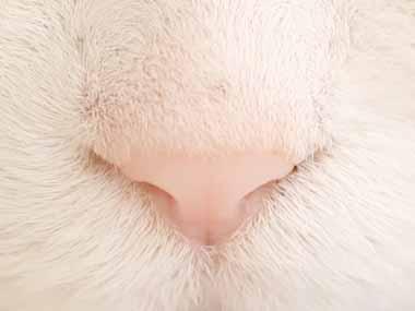 ネコ好きは何秒耐えられる? → 猫たちの顔をアップで撮ってみたらこんな感じ…