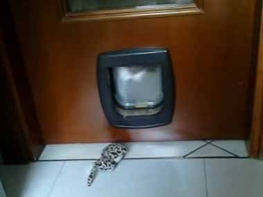 猫ドアから「バタバタ」音がする。ドアの向こうからネコが「ぬいぐるみ」を取ろうとしていた → でもこうなる…