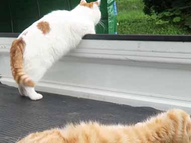 2匹のネコが軽トラの荷台にいた → 「見張り役」と「休憩中」な猫はこんな感じ…
