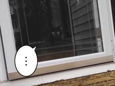 庭にいるネコを撫でてみた。その手をうちの黒猫に嗅がせてみる → こうなった…