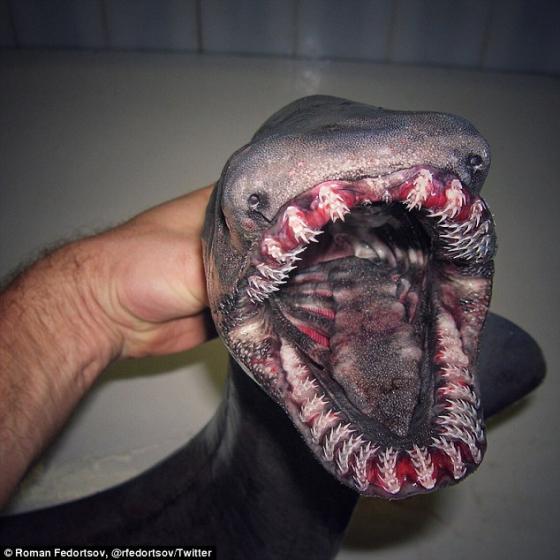 【閲覧注意】ロシアの深海生物さん、とんでもない造形になる