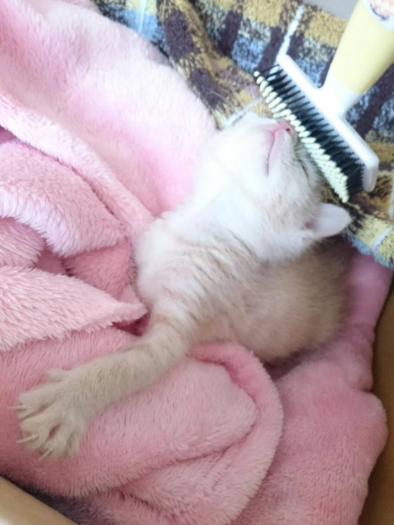 【画像あり】子猫が家に来てから一週間経った