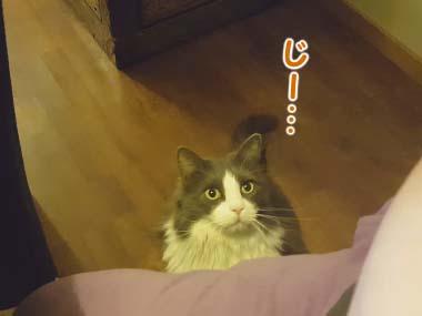 ネコを少し撫でてみた。やめてみる。こちらを「じっと」見てきた → すると…