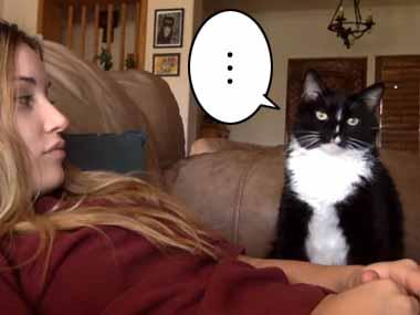 ネコが何度も催促してきた。お姉さんはいっぱい撫でてあげる。でももう十分でしょ? → やめてみたら…