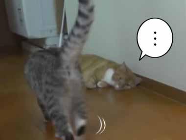 ネコが「縦列駐車」をする → 尻尾がちょっと邪魔でこうなる…