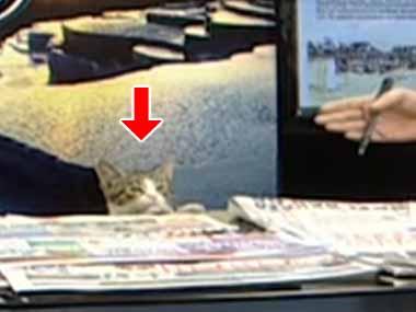 見知らぬ子ネコがさりげなく「ニュース番組」に乱入してきた。テーブルの上に乗る → そして…