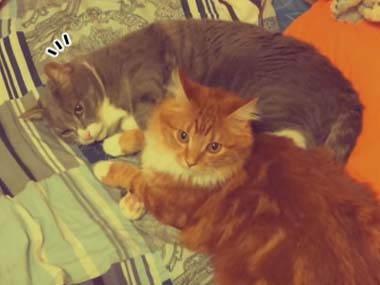 2匹のネコが「まったり」していた。ちょっと近づいてみる → どうやら恋人同士だったようです