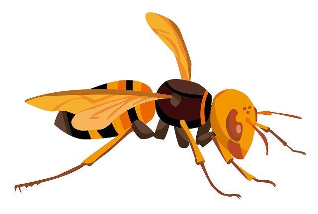 ワイ「やべっスズメバチやんけ!刺されるやんけ!」