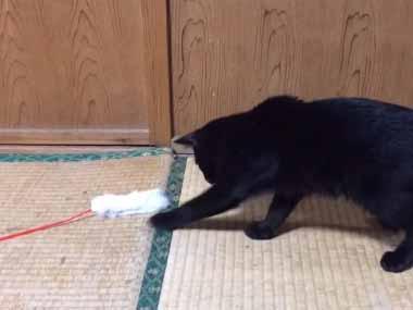 ネコと「ねこじゃらし」で遊んでみた。猫はちょっと怖がっているようだ → すると犬がやってきて…