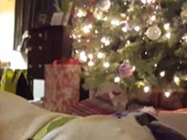 犬はクリスマスに「おもちゃ」をもらった。嬉しくて楽しくていっぱい遊ぶ! → こうなった…