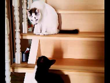 2匹のネコが階段にいた。口笛を吹いたらどんな反応をするのかな? → こうなる…