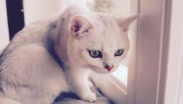 猫背を直した結果wwwwwwwwwwwwwwwwwwwww
