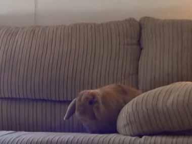 ウサギがソファの隅にいた。そこにもう1匹やってくる。 → こうなる…