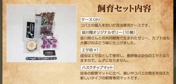 【画像あり】哀川翔のカブトムシ育成キットの価格www