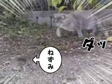 猫がネズミを狙っていた。でもすぐには捕まえない。ちょっと様子を見ていた → すると…