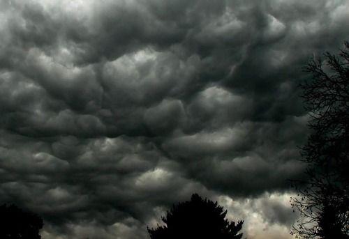 「カンザス州を襲った嵐の翌日…ヒマラヤスギが変わり果てた姿に…」病的な美しさだと注目を浴びる