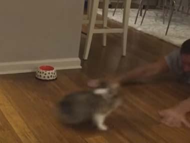 ころっころな子イヌをお父さんが押してみる。床を滑る → こうなるw