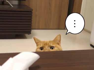 ネコがいる部屋でテーブルの「拭き掃除」をする → もちろん猫はこうなる…