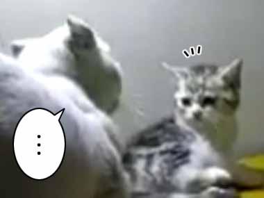 ネコが「もぐもぐ」ゴハンを食べていた。突然、目の前の猫に叩かれる → するとネコはこうした…