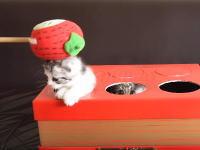 子猫のモグラ叩きで再生回数を稼ぐユーチューバーは卑怯(*´д`*)