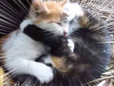 2匹の子ネコがケンカを始めた。カメラを向けてみる。これ以上は撮っちゃダメ! → 兄弟子猫はこうする…