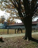 運動場では牛が放牧されてました