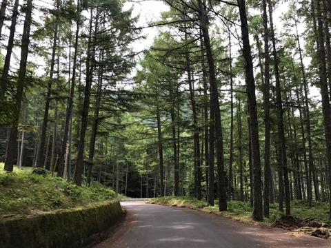 林道は何箇所か工事で砂利道になっている場所が