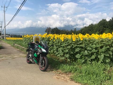 明野の向日葵畑