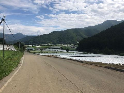 川上村では収穫シーズン真っ盛り