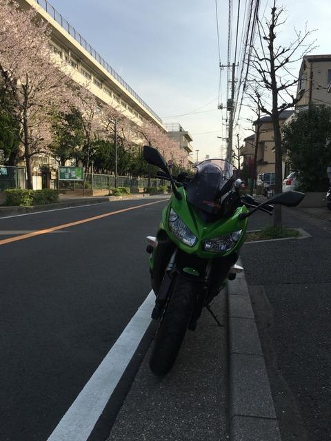 磐梯吾妻スカイラインから会津の馬刺し、追加で合戦場のしだれ桜も。