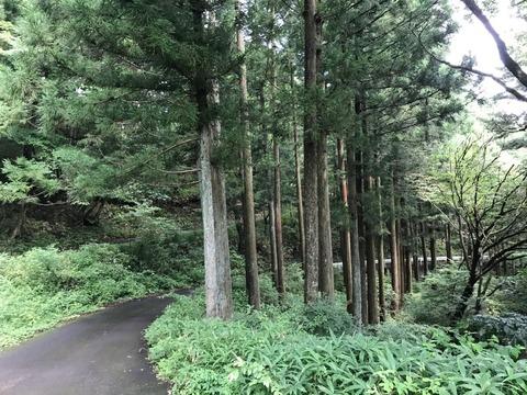 県道63号から県民の森を突っ切って県道56号へ
