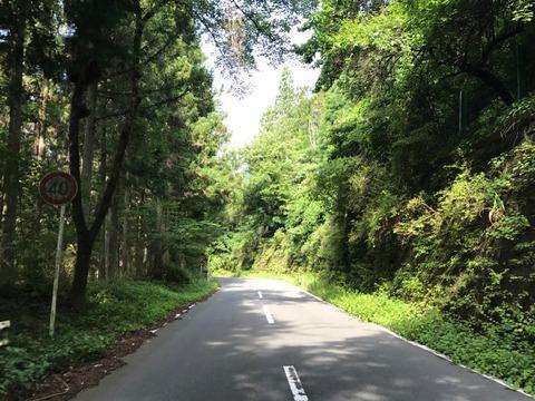 土坂峠は高低差のそこそこある緑の深い道