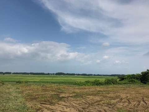 県道30号の田園風景